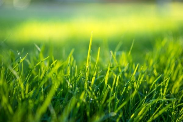Como hacer crecer el césped o la hierba rápidamente