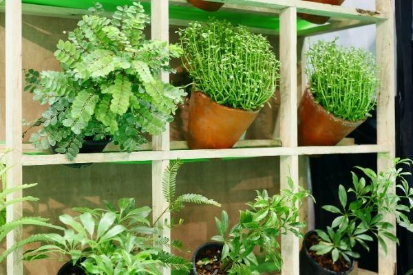 Como hacer un jardin vertical casero para interior.jpg