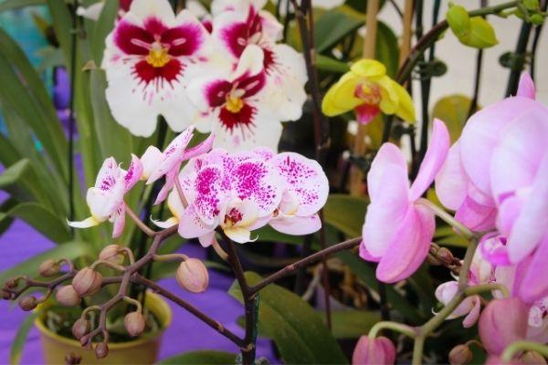 Planta de orquídea para absorber la humedad del aire.jpg