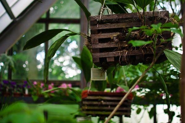 Plantas que absorben la humedad de la casa