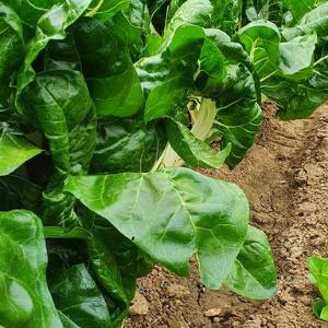 curso online de huerto orgánico